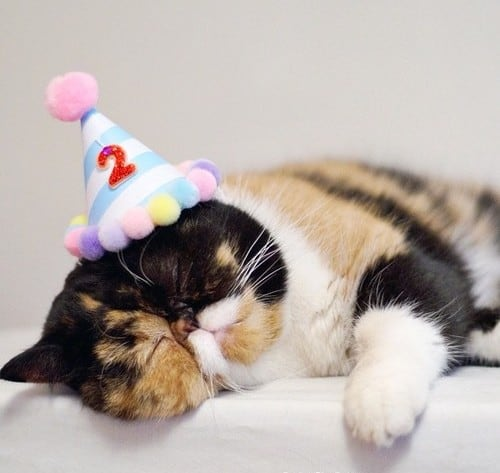 Cat birthday hat - Cute Cats in Hats