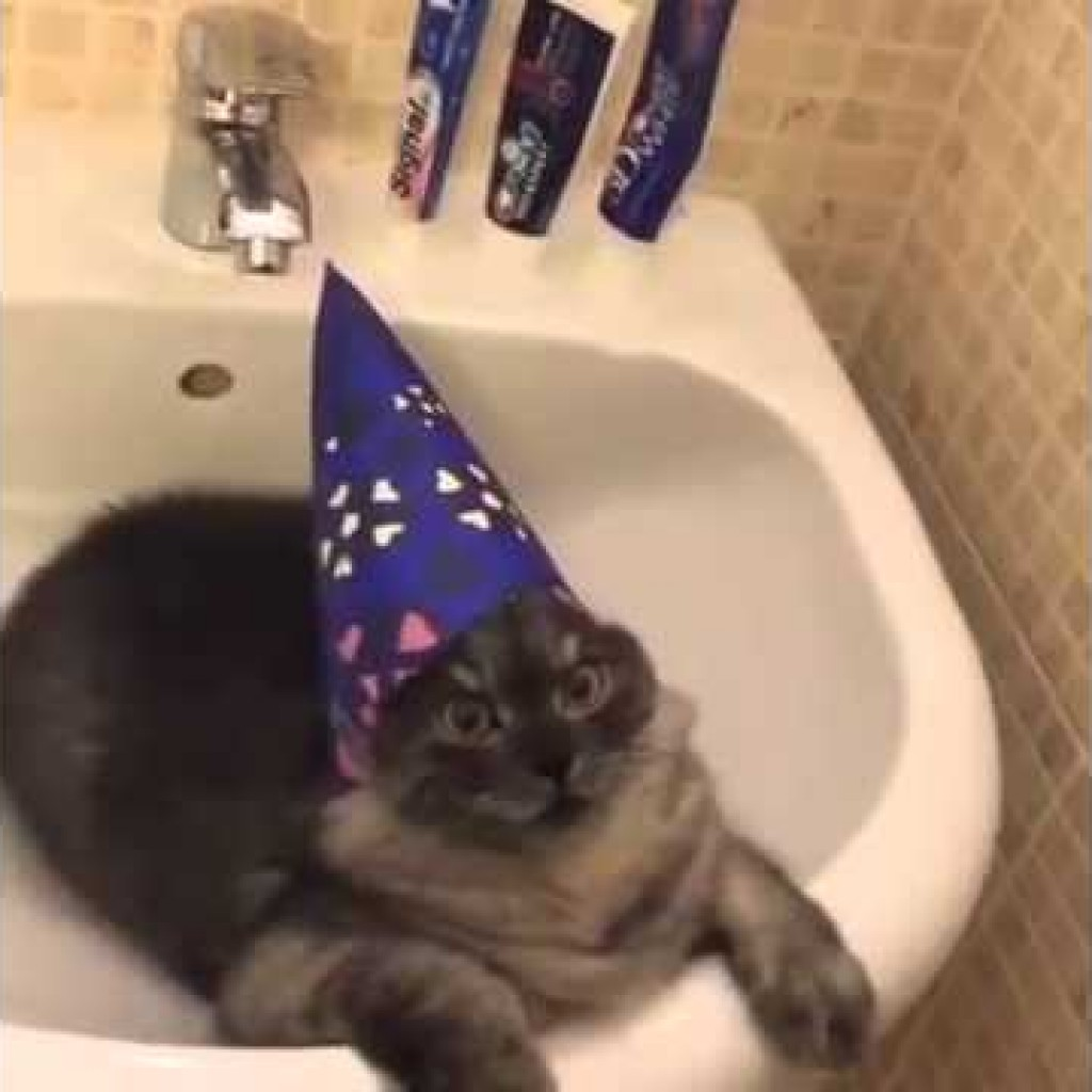Wizard Cat & Videos of Cute Cats in Hats