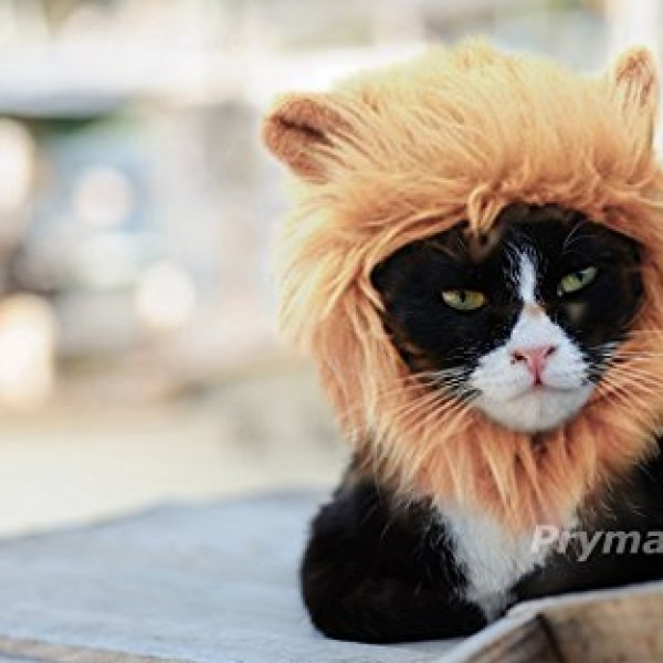 Ferocious-Lion-Please-Be-Aware-of-Fake-Products-From-Other-Sellers-0-3 ...