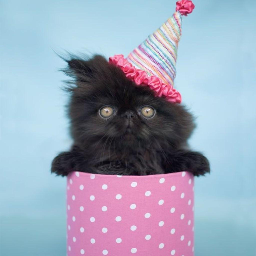Фото поздравление с рождения котики