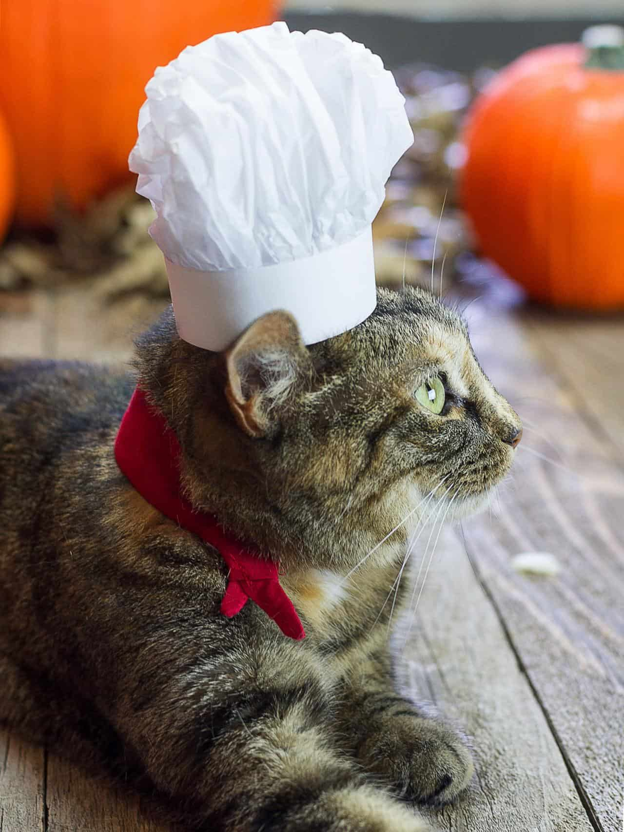 chef hat cat cute cats in hats