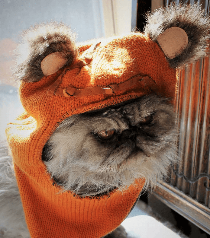 Ewok Hat: Cute Cats In Hats