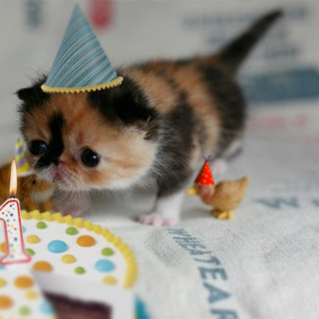 first birthday kitten 1024x1024 birthday cat photos cute cats in hats