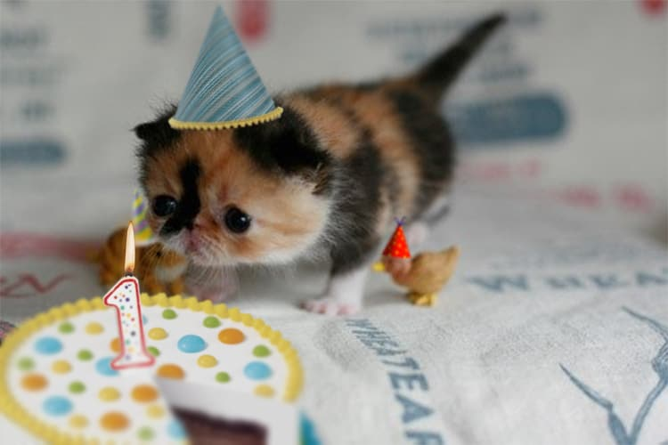 Images Of Cats In Birthday Hats