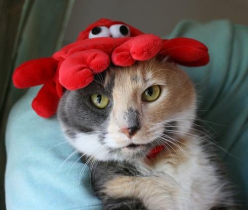 octopus cat cute cats in hats