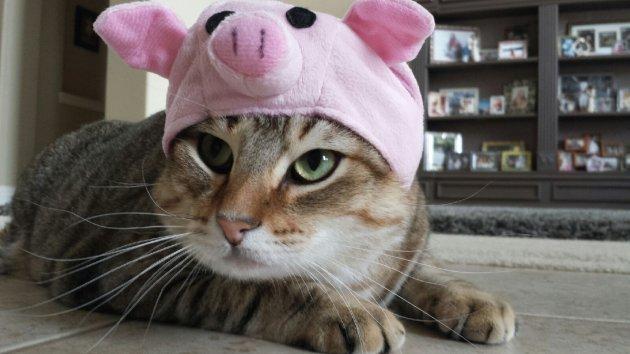 Cat Loves Pig