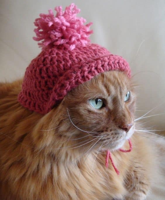 Pic Of Cats Wearing Pink Pussy Hat