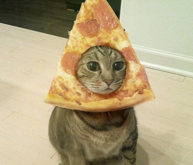 Pizza Cat & Pizza Cat - Cute Cats in Hats