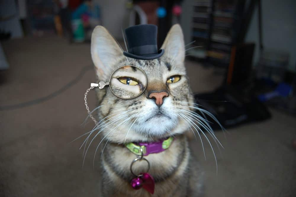 Cat In A Top Hat Monocle
