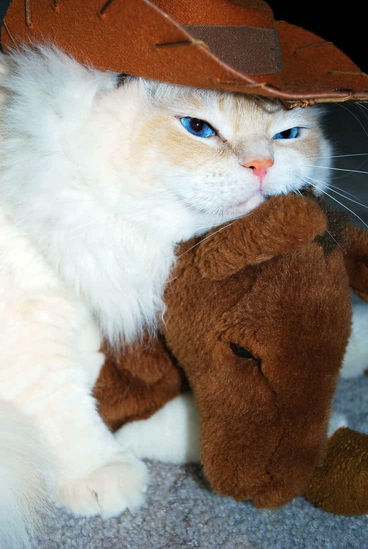 Cats Cowboy Hats