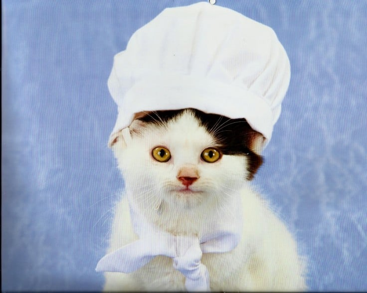 Cat In Hat Scarf