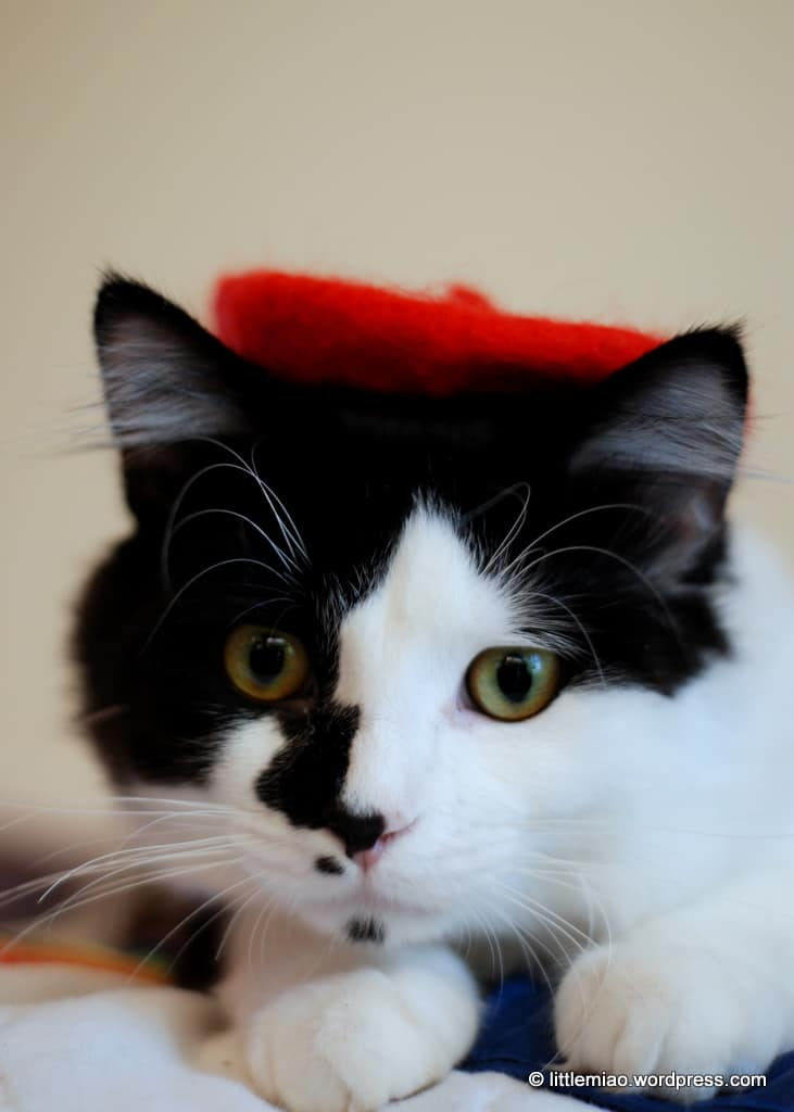 Cat In A Hat In French
