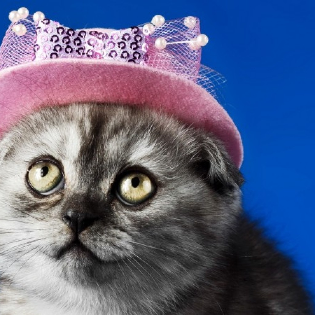 250+ photos and videos of cute cats in hats