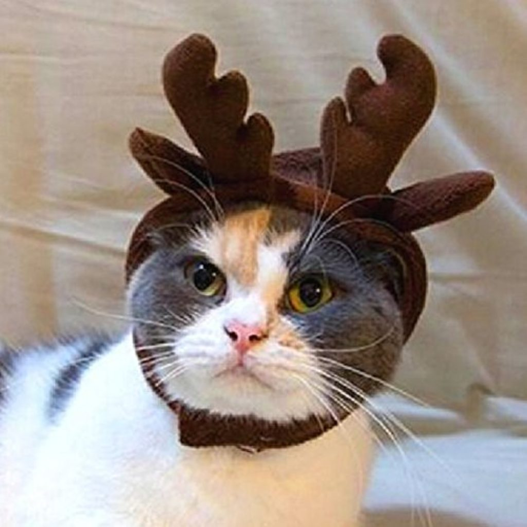 Jocestyle Holiday Antler Headband Pet Dog Cat Hat Puppy Christmas Holiday Cosplay Costume Coffee (Style ... & Cheap Cat Hats Online - Santa hats birthday hats etc.