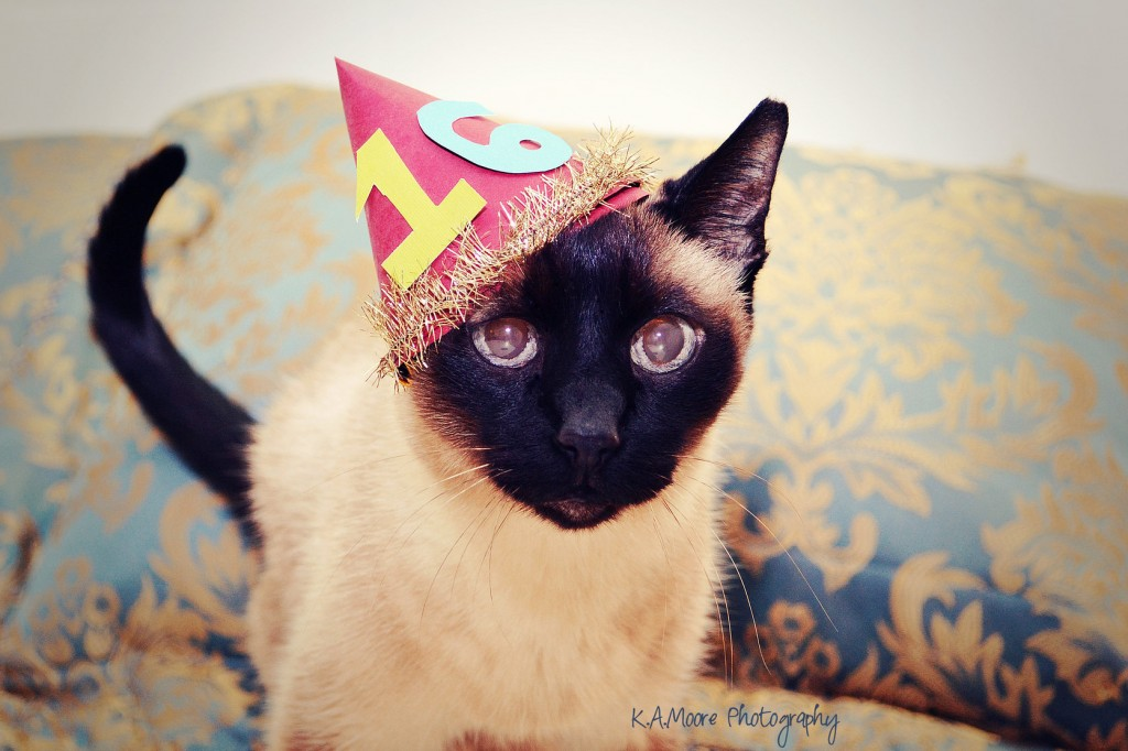 Birthday Cat Photos