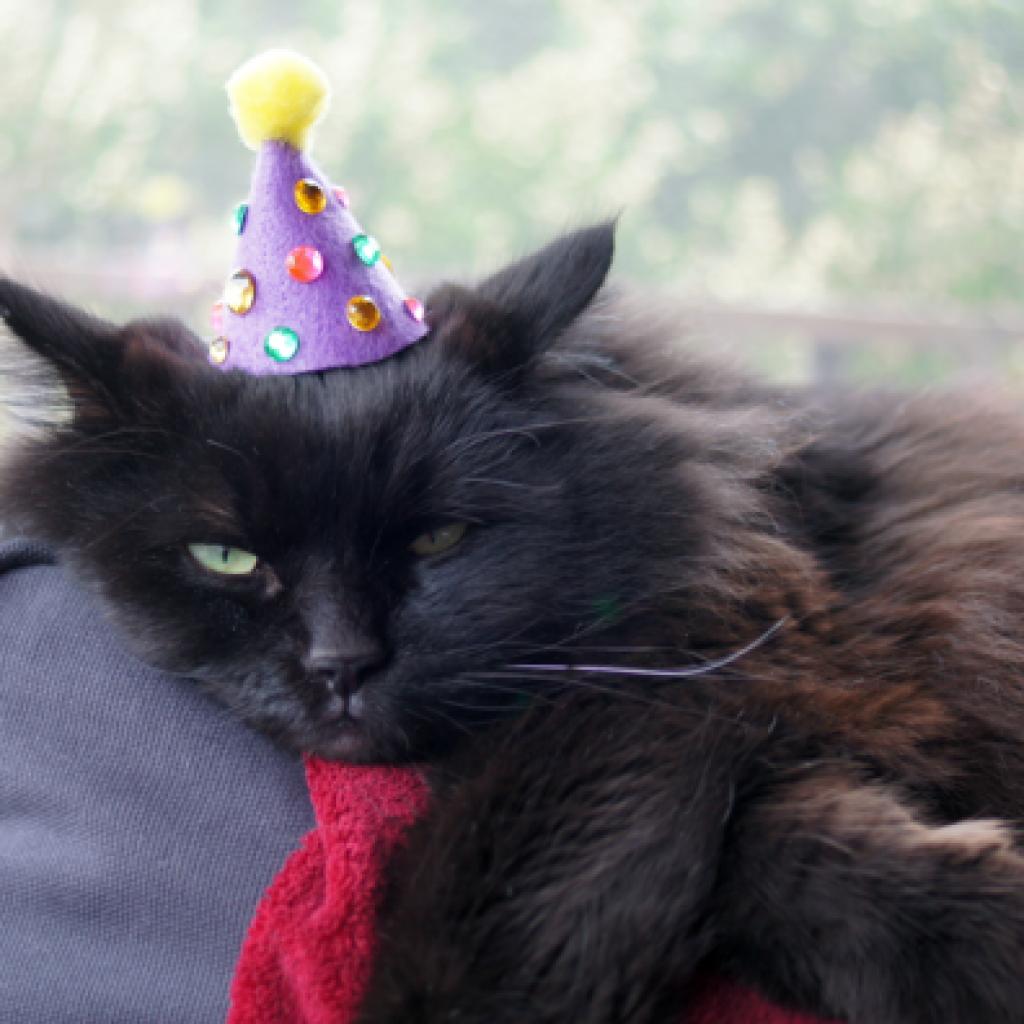 Gem Birthday Hat Cat