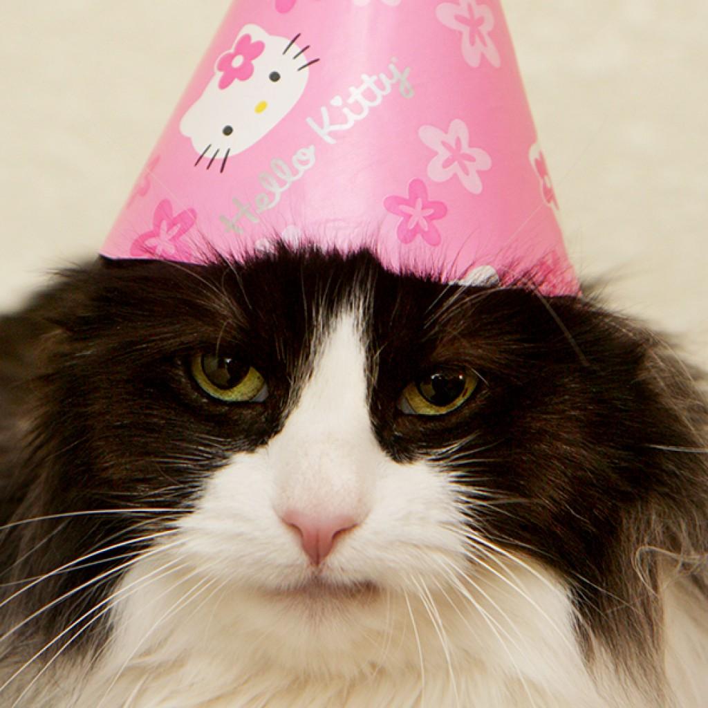 Hello Kitty Cat Hat
