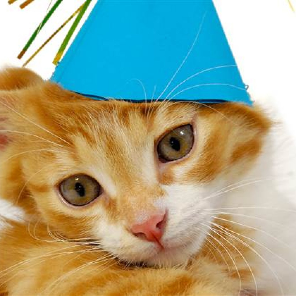 Birthday Cat Photos