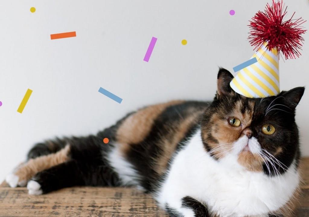Pudge Birthday Hat Cat