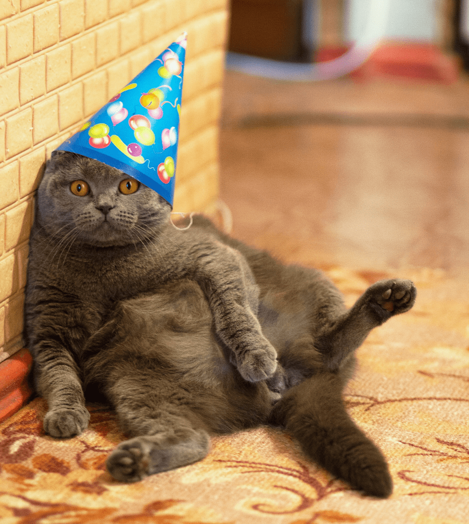 Fat Cat Birthday Hat