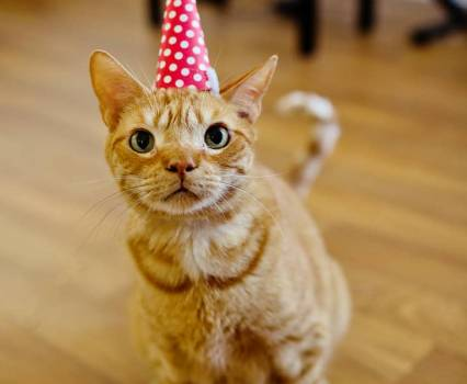 Birthday Hat Cat Archives